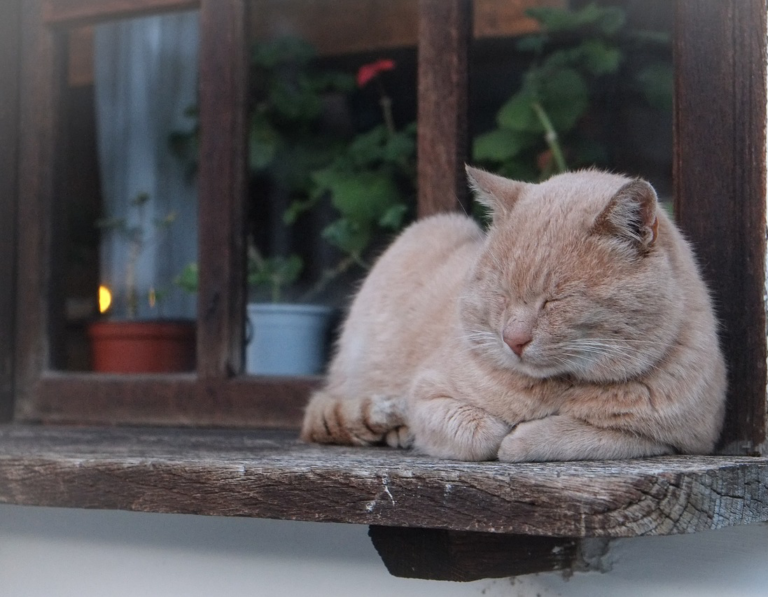 Cat sleeping on a windowsill.